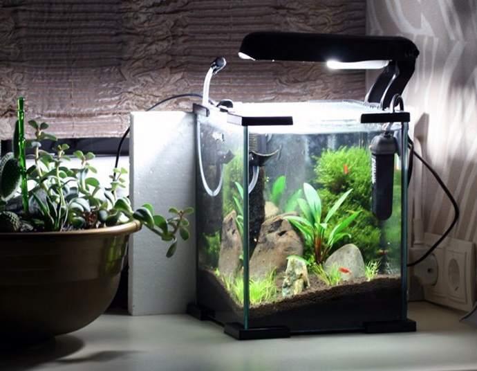 Плавающие в аквариуме рыбки радуют глаз и успокаивают нервы