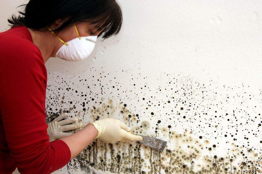 Черная плесень на стенах - следствие высокой влажности в санузле