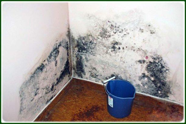 Такая стена нуждается в обязательной очистке