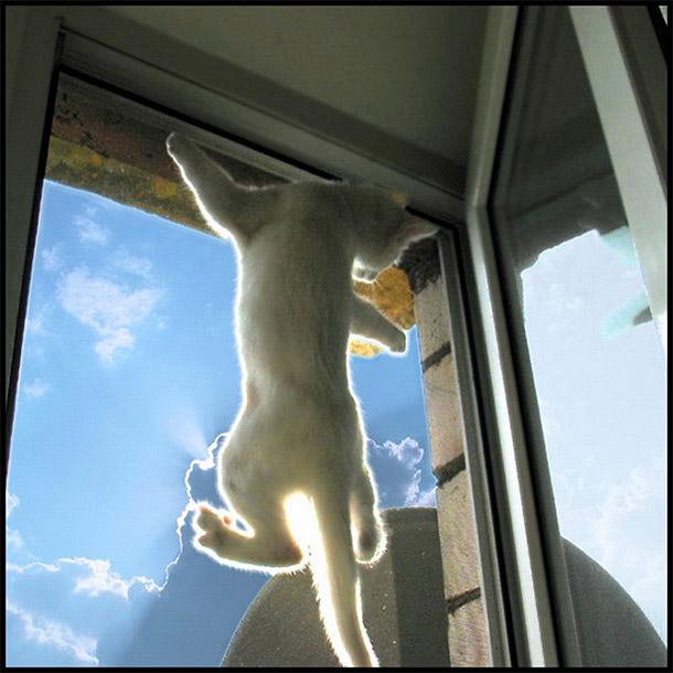 Кошка на москитной сетке