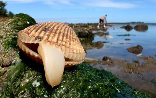Сделайте вывод о значении о раковины в жизни моллюсков.из чего образуются раковины